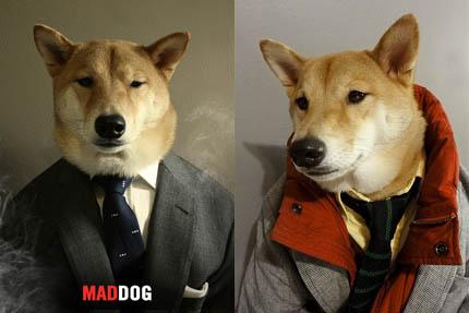 Rozkręca się rynek psiej mody, fot. Menswear Dog