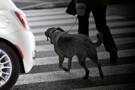 Canivera City Dog wspiera psy z miasta, fot. Depositphotos