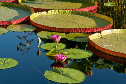 Dzikie czy geometryczne kształty oczek wodnych?, fot. Depositphotos