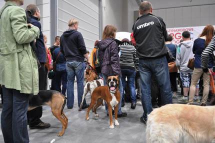 Pet Fair w tegorocznej edycji zgromadziły 70 wystawców, fot. MTŁ