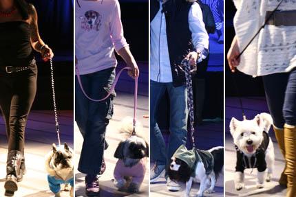 Pokaz mody dla psów MrauHau, fot. Katarzyna Tarabuła
