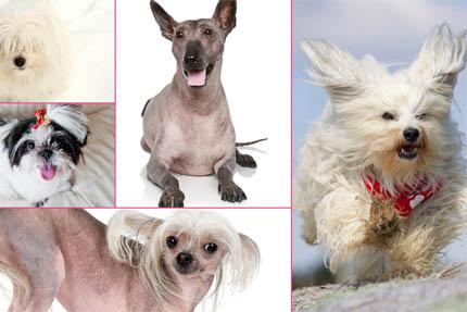 Jaki pies dla alergika?, fot. Depositphotos