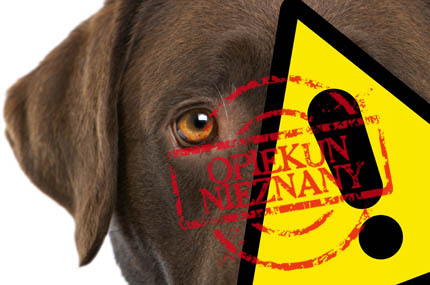 W Polsce wciąż łamie się prawa zwierząt, fot. archiwum