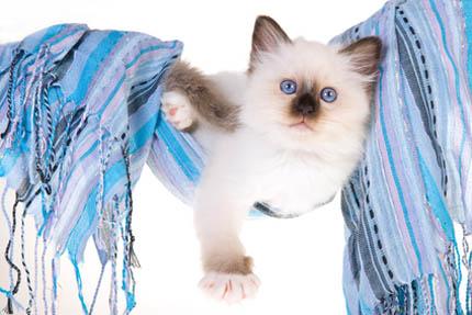 Pies lub kot w domu to mniejsza podatność na stres, fot. Depositphotos