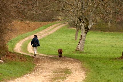 Nasza wspólna droga ze zwierzętami, fot. Depositphotos