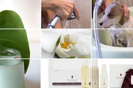 Moda na organiczne kosmetyki wkracza w świat psa, fot. Depositphotos