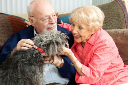 Ludzie żyjący z psem lub kotem czują się szczęśliwsi, fot. iStock