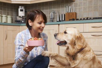 Karmienie psa czy kota nabiera dziś nowego znaczenia, fot. iStock