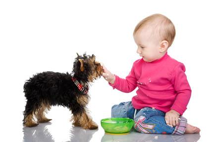Do miski psa trafiają niedojedzone posiłki dla dzieci, fot. Depositphotos