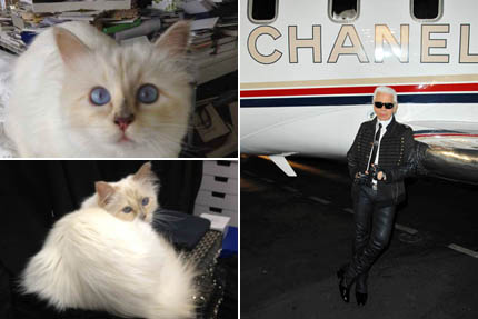 Choupette oraz Karl Lagerfeld, fot. The Choupette Estate/Depositphotos
