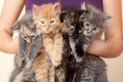 Średni koszt odchowania kociaka to ponad 600 zł, fot. Depositphotos