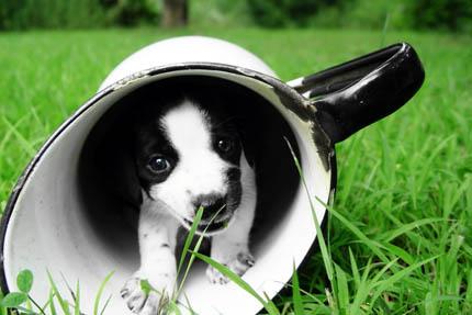 Estetyczne gusty właściciela decydują o ewolucji psa, fot. iStock