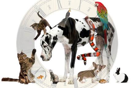 Czas upływa zwierzętom w nieco odmienny sposób, fot. iStock