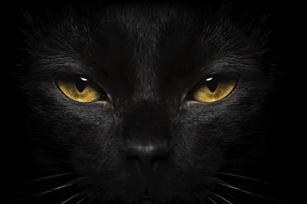 Świecące oczy kota to cecha fizjonomii, fot. iStock