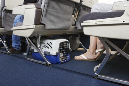 Komfort podróży zwierzęcia zależy od jego wielkości i wagi, fot. iStock