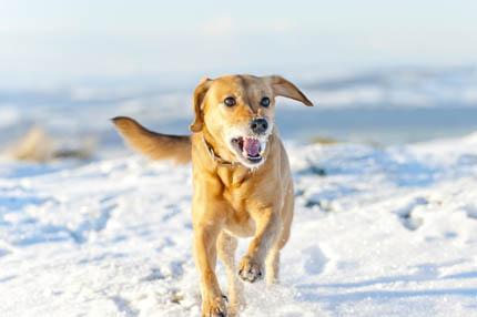 Nie w każdym miejscu można zwolnić psa ze smyczy, fot. iStock