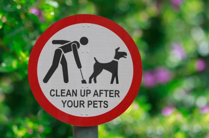 44 proc. właścicieli w ogóle nie sprząta po swoim psie, fot. iStock