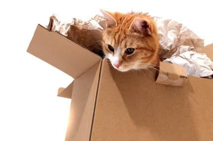 Przeprowadzka to dla kota wyjątkowo trudny czas, fot. iStock