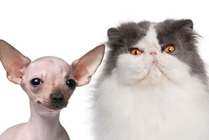 Psy i koty to istoty o zupełnie innych cechach, fot. Depositphotos