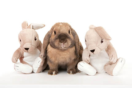 Niesłabnącą popularnością cieszą się króliki miniaturki, fot. Depositphotos