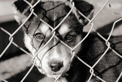 Bezdomność zwierząt jest skutkiem ludzkiego zaniedbania, fot. iStock