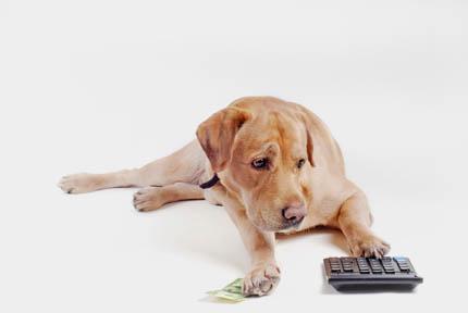 Nie bardzo wiemy, co dla bezdomnych zwierząt robią urzędy, fot. iStock