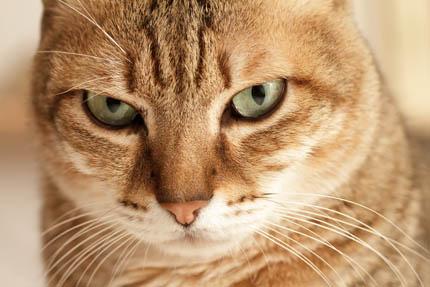 Jak rozumieć zachowanie kota?, fot. Depositphotos